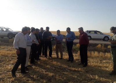 برنامه پلات فرم تحقیقی اجرایی در مزارع گندم دیم استان اجرا می گردد