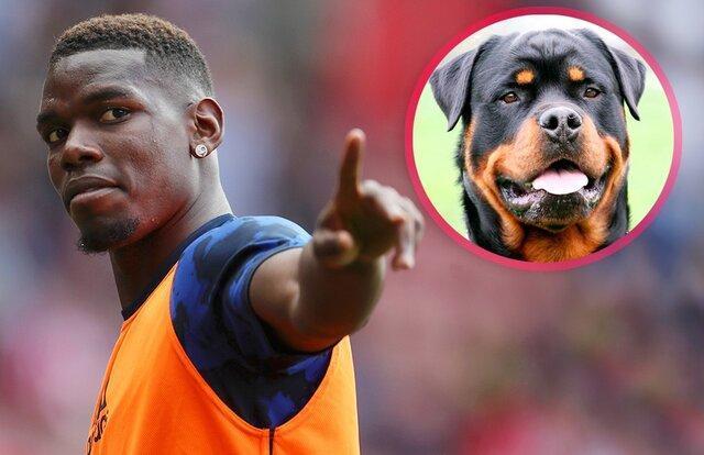 هزینه نجومی که بازیکن معروف برای خرید سگ محافظ کرد